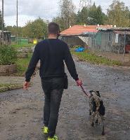 Jesienne wizyty wolontariackie w Schronisku dla Zwierząt w Olsztynie