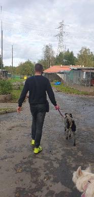 Ilustracja do aktualności Jesienne wizyty wolontariackie w Schronisku dla Zwierząt w Olsztynie