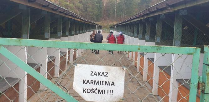 Ilustracja do aktualności Nowy wolontariat w Tomarynach