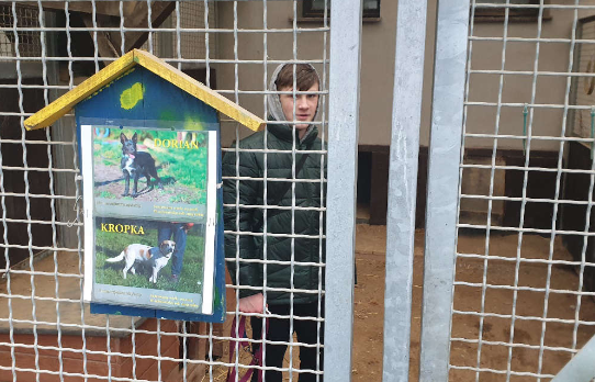 Ilustracja do aktualności Psy, konie i wizyta na basenie