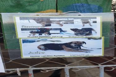 Ilustracja do aktualności Grudniowy wolontariat w schronisku dla zwierząt w Olsztynie